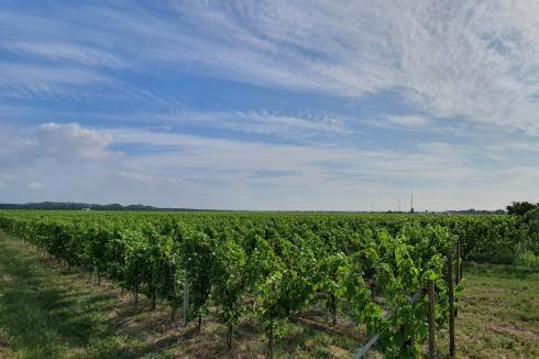 Ingersheim - cyllene au coeur des vignes
